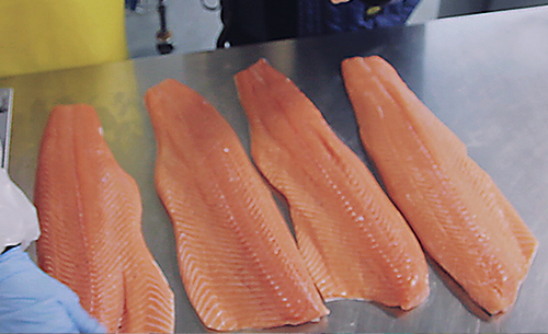 kroger_seafood_sustainability_fillets
